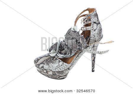 Luxury Snake Leather Women Shoe On White Background