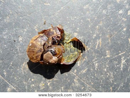 Squashed Snail