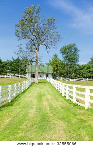Horse farm with white wooden fences