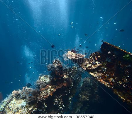 Underwater shoot of a ship wreck's part USAT Liberty with school of a fish