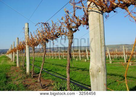 Aldinga Autumn Vineyard