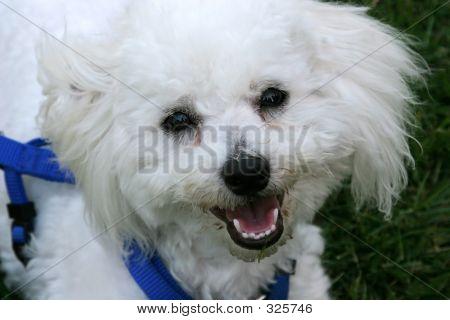 Puppy 103