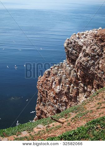 Red Cliff Of Helgoland