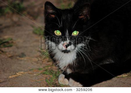 eine Katze Lady ist ein nächtlicher Jäger.