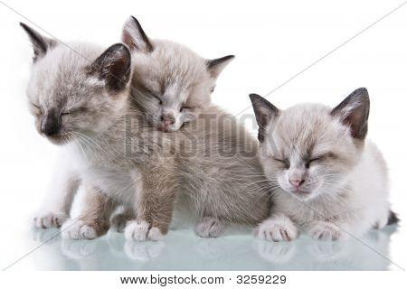 Bebé Gatitos durmiendo