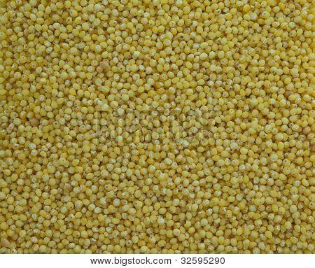 Millet Grains