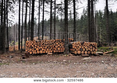 Cut Trees In A Forest