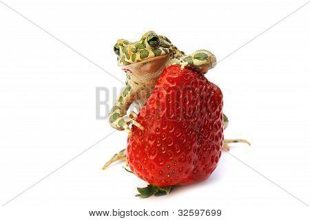 Frog Strawberry
