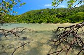 Mangrove tree in sea water over idyllic beach landscape, Thailand poster