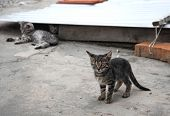 Adorable Two Kittens Playing Outdoors. Kittens Outdoor. poster