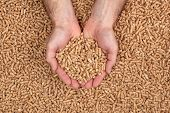 detail of hands showing wood pellets. Biomass and alternative fuel concept. poster