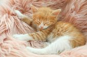 Cute Little Red Kitten Sleeping On Pink Furry Blanket poster