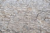 Relief Texture Of The Brown Bark Of A Tree. Horizontal Photo Of A Tree Bark Texture. Relief Creative poster