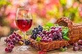 Autumn still life with ripe different grape varieties and wine glass. Behind the beautiful autumn bo poster