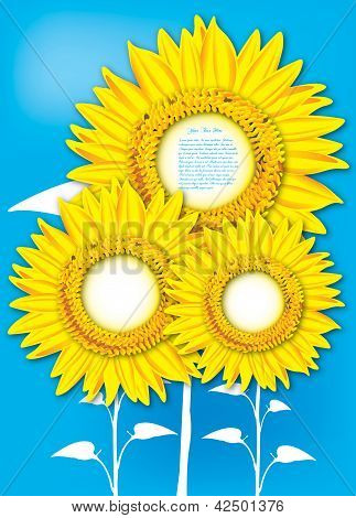 Sunflowers on blue background