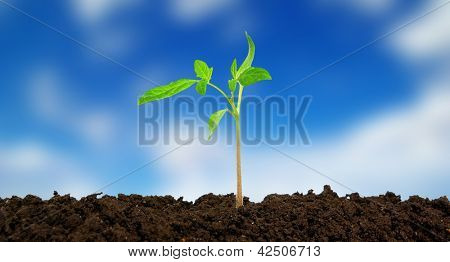 green plant on sky  background