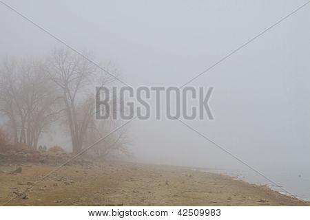 Foggy Lake Shoreline View