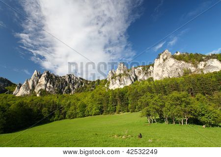 Summer In Mountains, Rock, Green Bush, Trees And A Grass