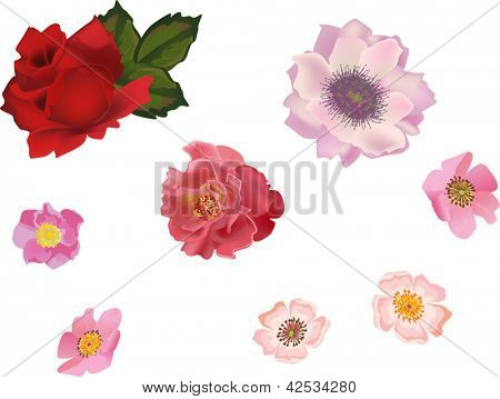 illustration with rose and brier flowers isolated on white background