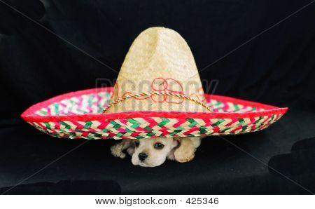 Acs Under Sombrero