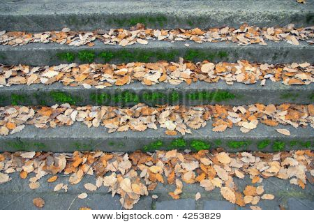 Fall Leaves On Concrete Steps
