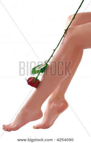 Woman Legs With Rose