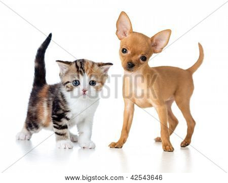 puppy and kitten isolated on white