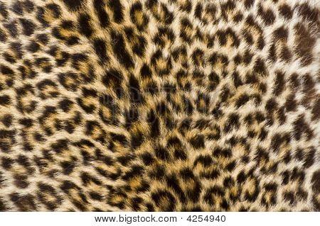 Leopard Fur
