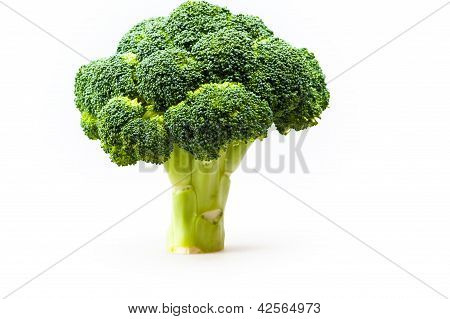 broccoli in a full length