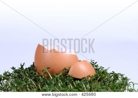 Easter Eggshells