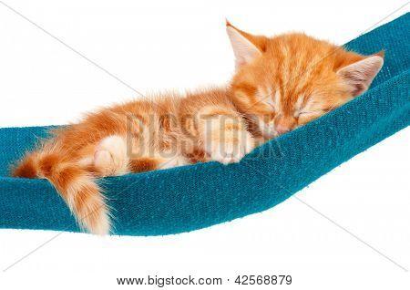 Cute red sleeping kitten in a hammock