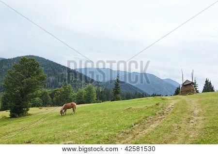 Brown Horse Grazing On A Green Meadow In Carpathians.