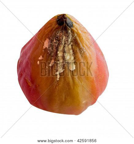 Rotten Rose Apple Isolated On White Background
