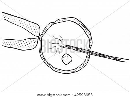 In Vitro Insemination Drawing