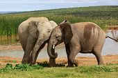 Playful Elephants