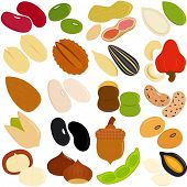 Vector Icons of Beans, Nuts, Seeds