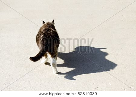 Big Cat Ferocious Shadow