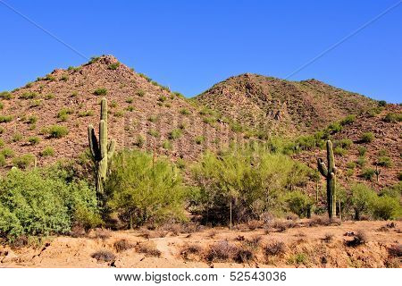Arizona desert with saguaro cacti