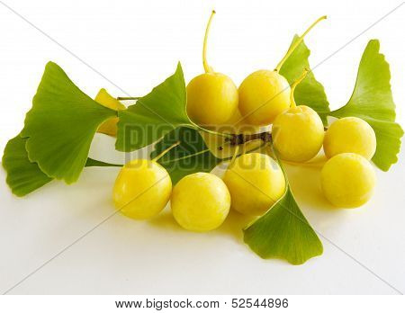 fruits and leaves of gingko biloba tree