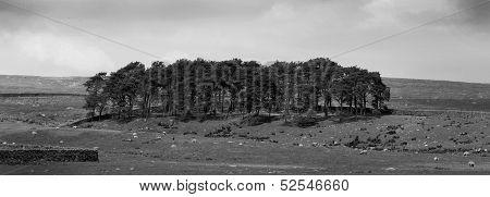 Trees On Mound