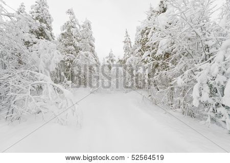 The Path In A Snowy Winter Forest