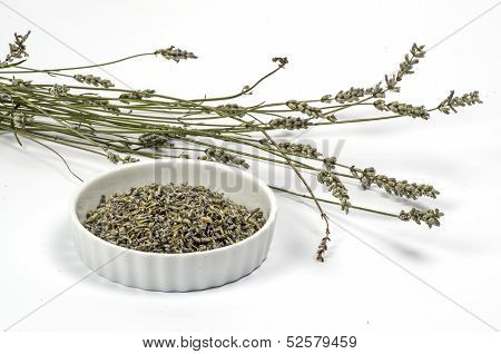Dried blossom of lavender