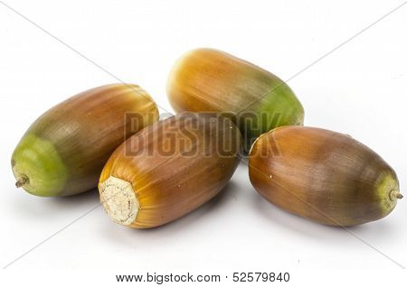 Four acorns on white