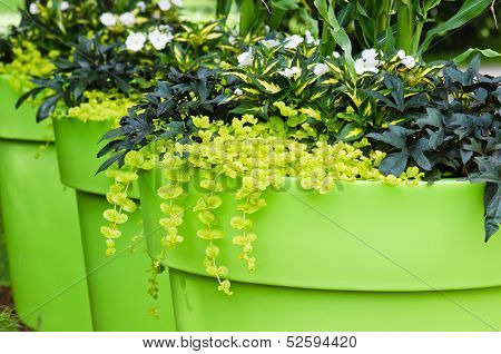 Large Plant Pots With Flowers In The Garden, Close-up  .