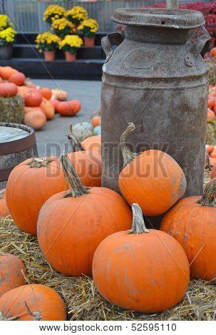 Colorful Pumpkin Farm Display