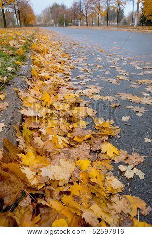 Golden Fall : Defoliation time