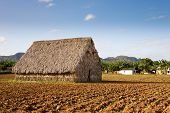 picture of tobacco barn  - A drying shed on a tobacco field in the town of Vinales Cuba - JPG