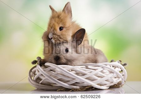 Rabbit on Bunny, Happy easter