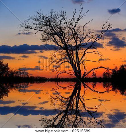 leafless tree on sunset background near lake