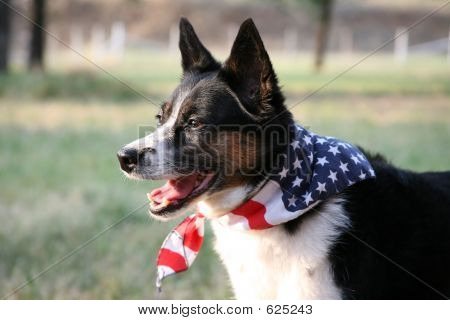 Dog With Flag Bandanna